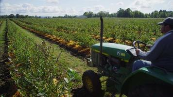 Tractor driving through blueberry field. Shot on RED EPIC for high quality 4K, UHD, Ultra HD resolution. video