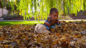 Young boy and puppy playing in fall leaves. Shot on RED EPIC for high quality 4K, UHD, Ultra HD resolution. video