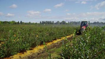 Tractor spraying blueberry field. Shot on RED EPIC for high quality 4K, UHD, Ultra HD resolution. video
