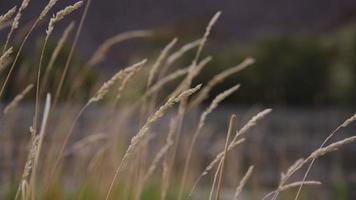 close up de grama com rio no fundo video