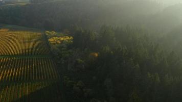 video aéreo del valle de willamette, viñedos de oregon en otoño