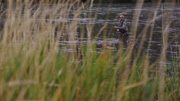 homem pescando com mosca no rio é emoldurado por grama alta video