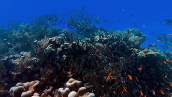 Various types of corals under the beautiful sea video