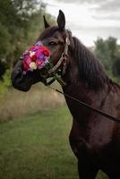 portrait of a brown horse with a bouquet of colorful flowers photo