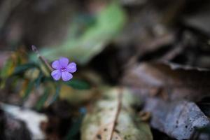 little purple flower in the forest photo