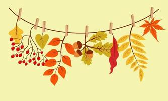 Autumn gifts hanging on the rope attached with clothespin. vector