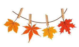 Maple leaves hanging on the rope attached with clothespin. vector