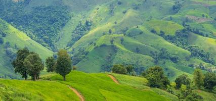 Mountain and grassland in the rainy season green natural scenery photo