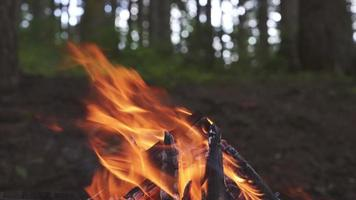 Fire Close up video