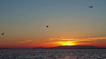 sagoma di stormo di uccelli in volo sulla riva dell'oceano al tramonto autunnale giallo video