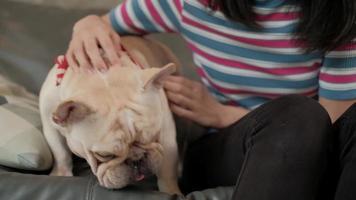 la femme joue et taquine joyeusement son chien, un bouledogue français. video