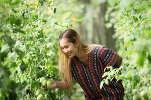 Women farmer checking tomato on tomato farm photo