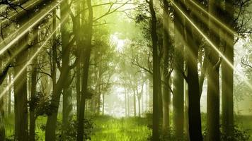 Jungle forest nature background video