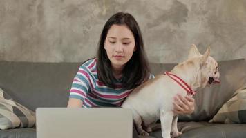 haustierliebhaber, lässige freiberufliche asiatische süße frau, die von zu hause aus arbeitet und einen laptop über drahtloses internet für online-geschäft verwendet, mit einem entzückenden hund, französischer bulldogge, die glücklich neben ihr sitzt. video