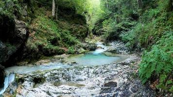 klar bäck i en vacker skog video
