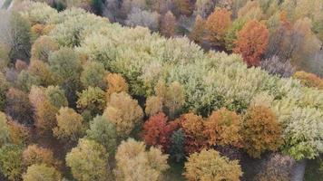 bellissimo paesaggio autunnale della foresta video