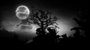 misterio noche de luna de halloween video