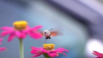 la mariposa se está comiendo la flor video