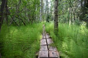 Footbridge over wetland in a forest. photo