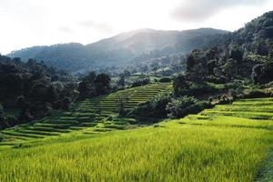 Rice fields on the mountain in the evening photo