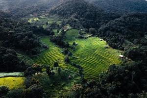 Green rice fields in the rainy season from the from the top above photo