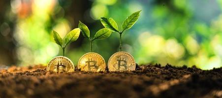 Bitcoin growth, Bitcoin coins on the ground and leaves grow. photo