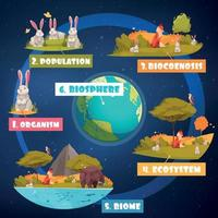 Biological Hierarchy Infographics vector