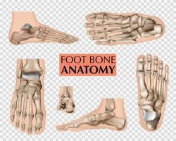 Foot Bone Anatomy Set vector