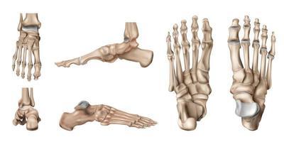 Foot Bones Anatomy Set vector
