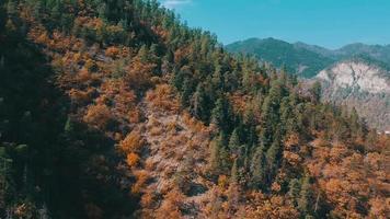autunno nella foresta aerea video