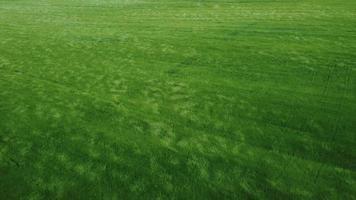 grön fältantenn video