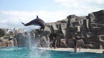 delfines en el agua video