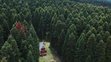 maison en forêt aérienne video
