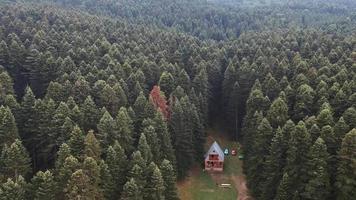 casa nella foresta aerea video
