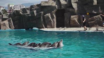 delfiner i vattnet video