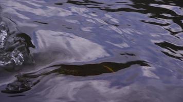 close up de água corrente no rio video
