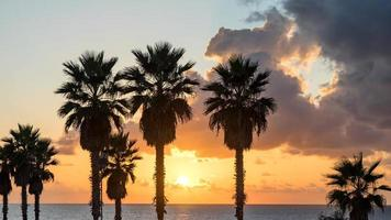 Palm tree on the beach against colorful sunset sky with clouds. Tel Aviv, Israel. photo