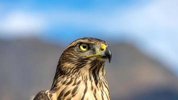 primer plano del hermoso halcón. otoño en abjasia foto