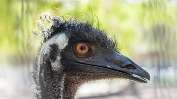 Close-up of ostrich in park Yarkon, Tel Aviv, Israel photo