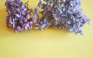 ramas de color lila se encuentran sobre un fondo amarillo foto