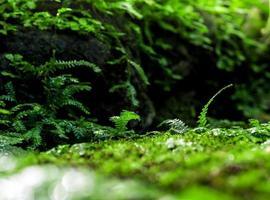frescura pequeñas hojas de helecho con musgo y algas en el jardín tropical foto