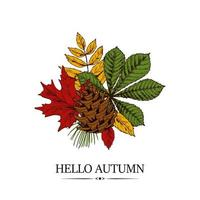 Hand drawn autumn design with chestnut, maple and rowanberry leaves and pinecone isolated on white background. Vector illustration in colored sketch style.