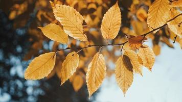 hojas de otoño de cerca foto