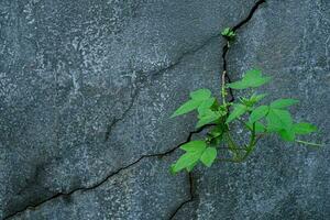Planta de árbol joven que crece a través del piso de concreto agrietado foto
