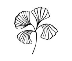 Ginkgo leaf hand draw vintage clip line art isolated on white background. Vector scandinavian design element for your story text