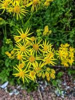 vivid yellow flowers photo