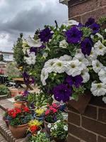 hanging basket flowers photo