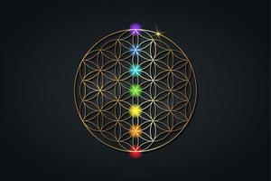 flower of life and the seven chakras. Gold Sacred Geometry, set chakra points meditation. Colored chakra lights. Yoga, zen, Buddhism, recovery, wellbeing concept. Vector isolated on black background
