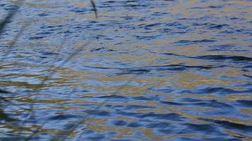 detailfoto van stromend water in de rivier video