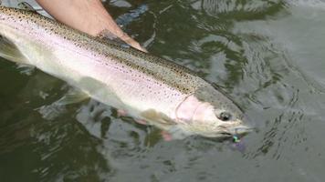 pescador segurando grande peixe prateado video